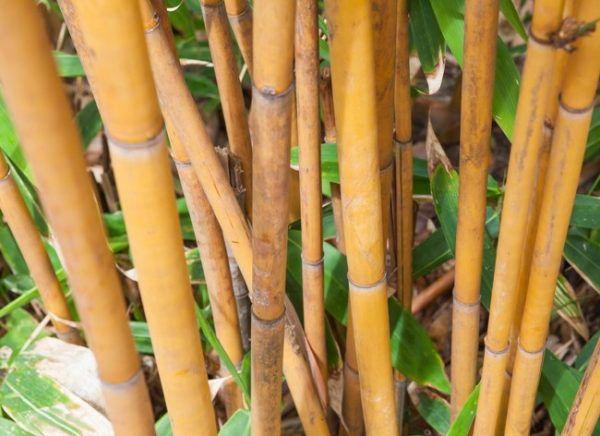 Бамбук для напольного покрытия