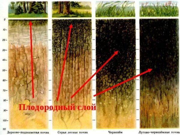 Толщина плодородного слоя почвы