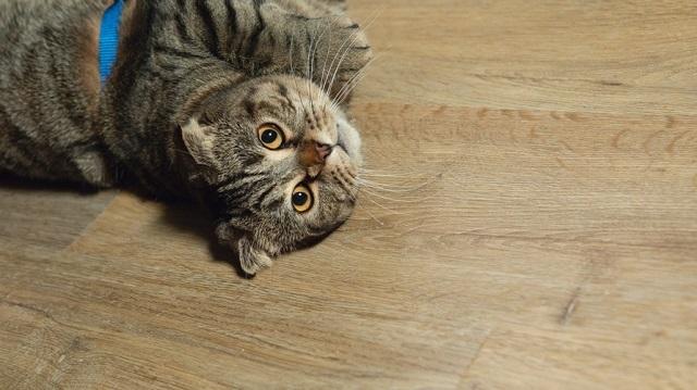 Кварц-виниловая плитка не впитывает запахи и не поддается повреждениям от кошачих когтей